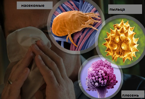 Причина аллергического ринита